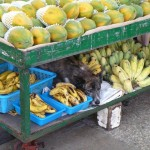 How much is that doggie in the bananas?